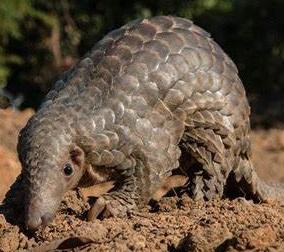 Endangered Species During Lockdown